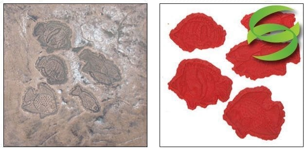 Aquatic Series Set of 5-Tropical Fish Right Concrete Stamping Mats
