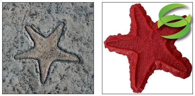 Aquatic Series Starfish Concrete Stamping Mats