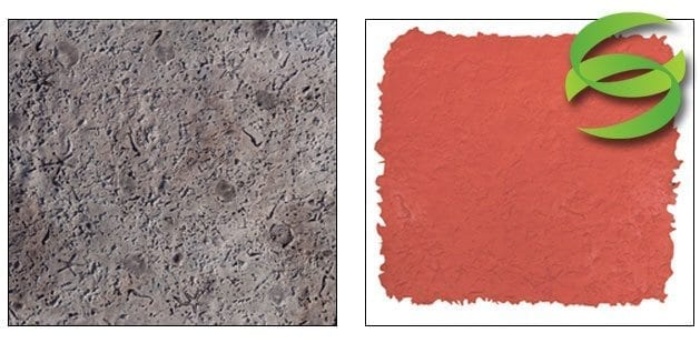Seamless Coquina Stone w Sea Shells Concrete Stamping Skin