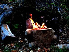 Natural Looking Concrete Wood Stump Fire Pit